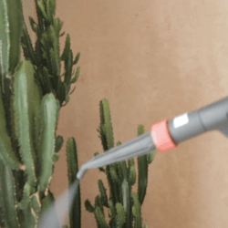 steam cleaner on plants