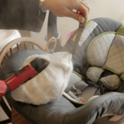 Sargent Steam Cleaner Carseat